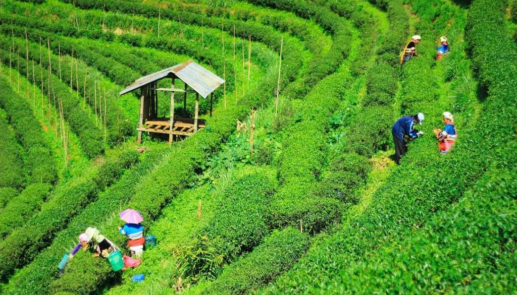 tourism in kannur travelco amazing north east tour packages