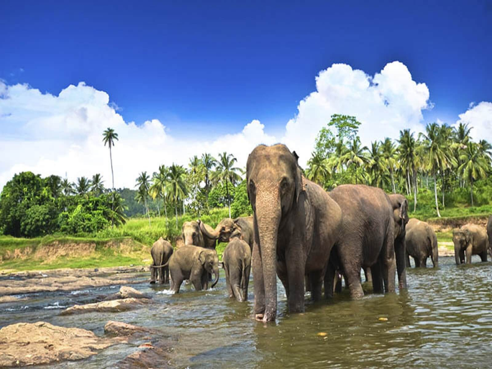 travelco-tour-packages-amazing-srilanka-3
