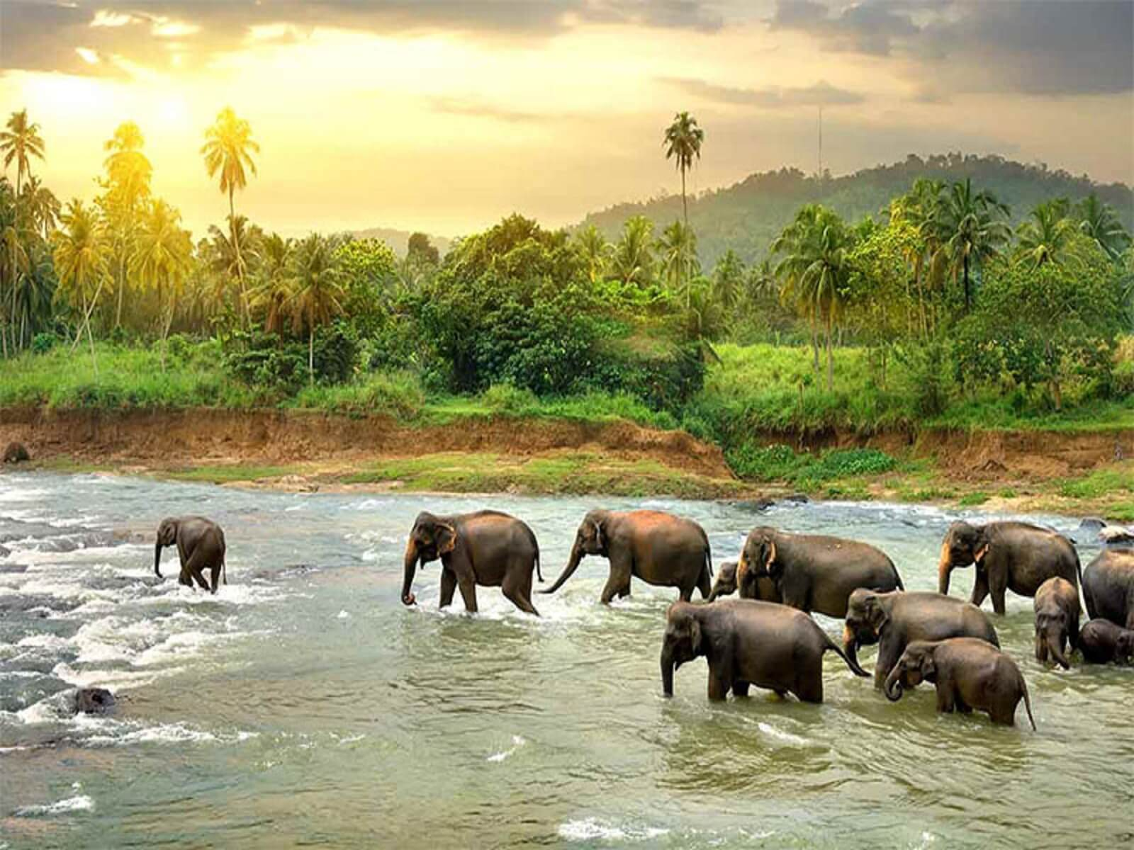 travelco-tour-packages-amazing-srilanka-4