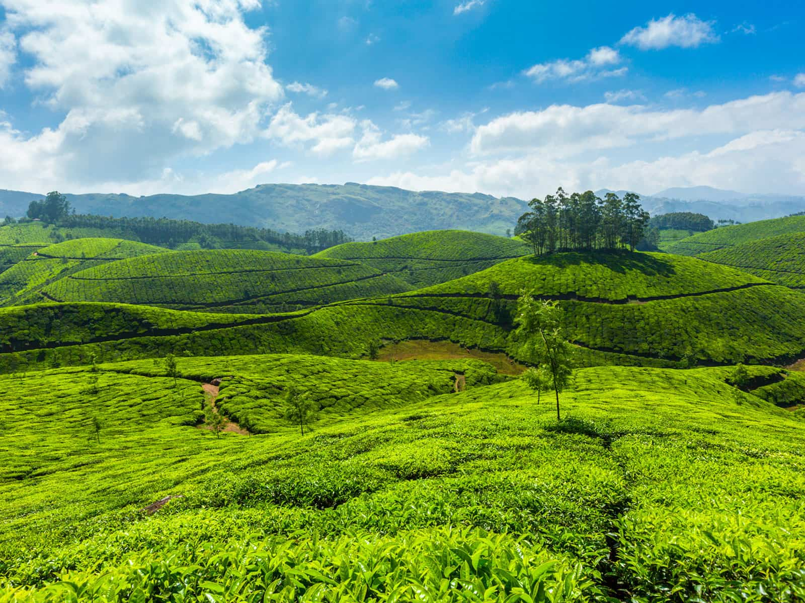 travelco-tour-packages-essential-kerala-3
